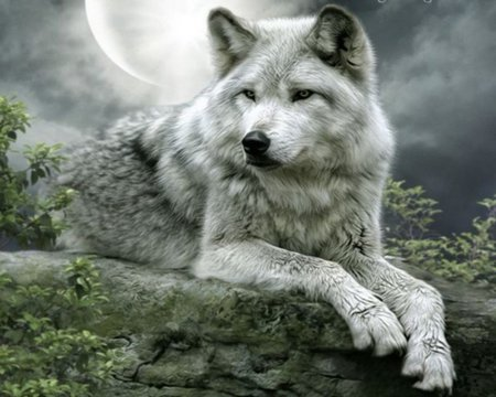 WOLF AT REST - grey, sky, wolf, moon
