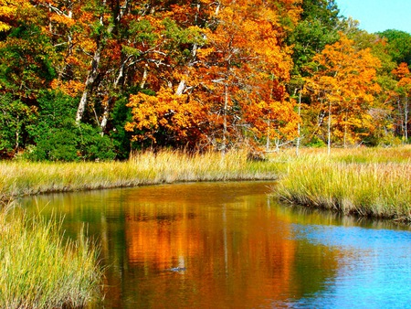 Fall on the Country Road - water, trees, color, fall, beauty, autumn
