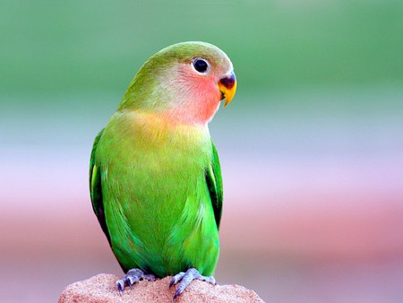 Beautiful Parrot - colors, picture, parrot, beautiful