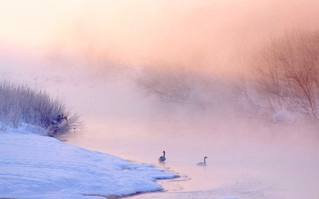 MISTY RIVER AND SWANS - triver, snow, swans, winter, misty, frozen