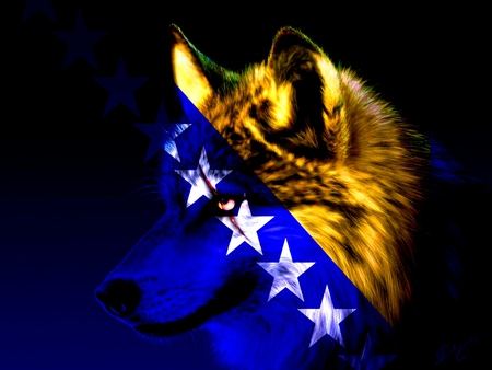 Bosnian Wolf - star, blue, yelow, bosnia, wolf