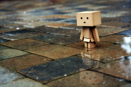 Danbo In The Street - rain, box, street, danbo