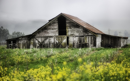 Abandoned Farm - flowers, beautiful, trees, field, sky, colors, beauty, architecture, misty, landscape, abandoned, farm, fog, grass