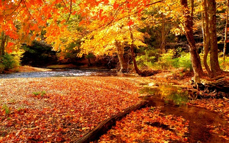 Autumn - wood, beautiful, river, beauty, fall, autumn, water, landscape, grass, forest, woods, creek, trees, colors, lovely, leaves, autumn colors, nature, peaceful