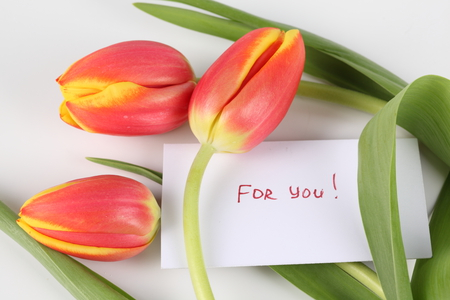 For you.....JACQELINE! - tulips, message, photography, nice, tulip, photo, flower, beautifully cool, flowers, bouquet, romance