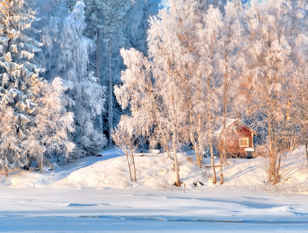 January colors - sesons, colors, houses, beauty, places, snow, white, popular, forest, nature, winter, frozen