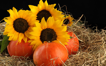 Sunflowers and fruits - sunflower, fruit, hay, nature, flower, yellow