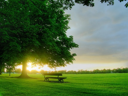 Good Morning to all - green, morning, spring, trees, sky, color, tree, good morning, sun, nature, bench