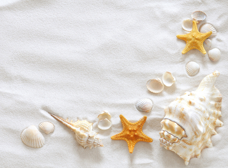 shells - cool, nice, beautiful, sea, shells, sand, stars