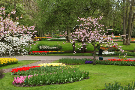 Flowers Garden - flowers, spring, beautiful, trees, fullcolour, flowers garden, park, magnolia, art photo