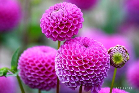 amazing flowers  flowers  nature background wallpapers on, Natural flower