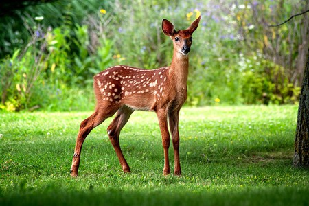 Wild Deer - deer, picture, wild, beautiful