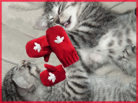 Kittens with red mittens - cute, red mittens, kittens, playful
