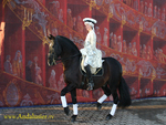 Andalusian Performance