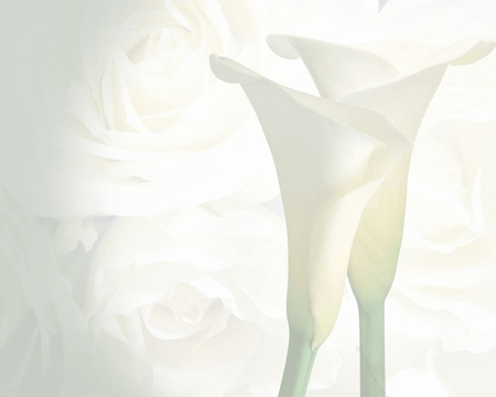 Wedding-Background - other, white, photo, background, wedding