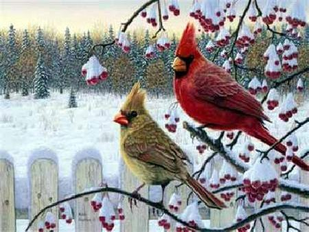 Beauty Of The Cardinal - berries, cardinals, trees, field, country, conifers, male female, birds, cold, fence, snow, winter