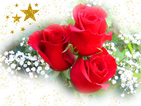 christmas flowers for all  flowers  nature background wallpapers, Beautiful flower