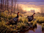 Turkeys In The Mist