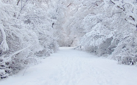 Beautiful Winter - trees, beautiful, white, snow, forests, nature, winter