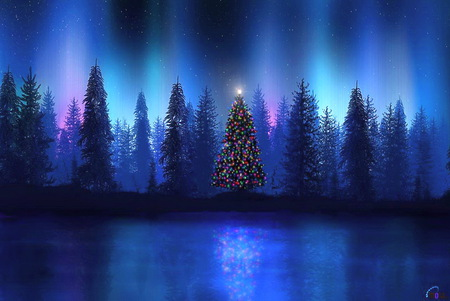 Christmas night - Forests & Nature Background Wallpapers on ...