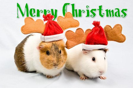 Christmas mice - Rodents & Animals Background Wallpapers on ...