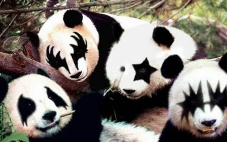 panda  kiss - group, panda, bear, music