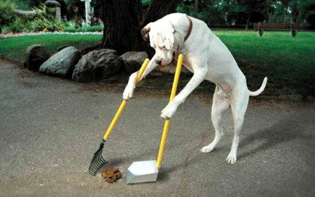 NICE  DOG - dog, cool, animal, cleaning