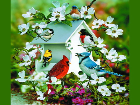 Spring birds - colors, robin, jay, finch, birdhouse, bluebird, flowers, chickadee, white, cardinal