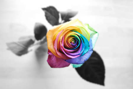 Comments on rainbow rose flowers wallpaper id 549229 for Rainbow rose wallpaper