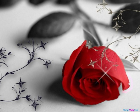pretty red rose  flowers  nature background wallpapers on, Beautiful flower