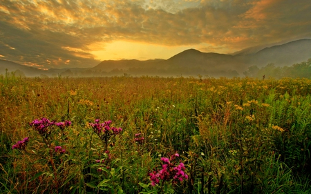SPRING FIELD - fiels, sunset, clouds, grass, flowers, green, mountain, spring