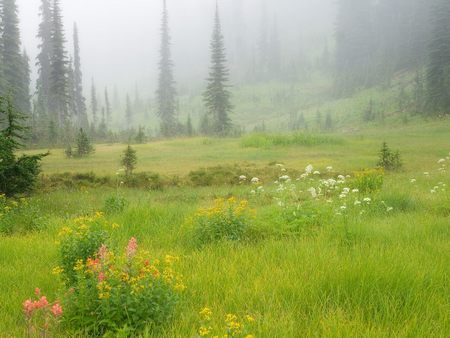 Meadows in the Sky Revelstoke National Park British Columbia Canada - meadows-in-the-sky-revelstoke-national-park-british-columbia-can
