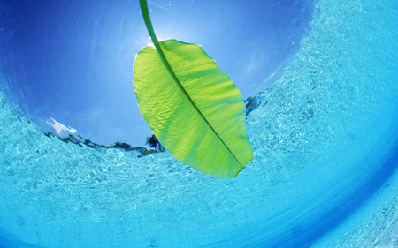 leaf - leaf, blue, green, ocean