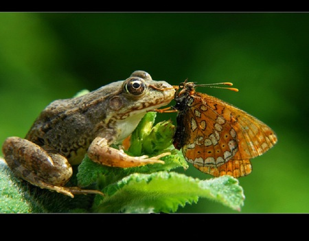Best friends - green, wings, frog, amphibian, cute, friends, leaves, butterfly, eyes, kissing