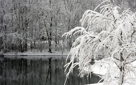 Home for the Holidays - water, beautiful, forests, calm, nature, winter, reflections, lakes