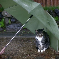 pussy under the umbrella