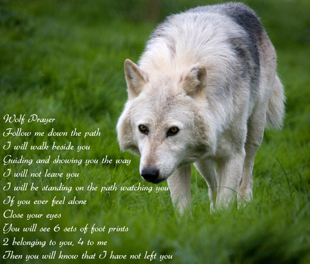 Wolf prayer - prayer, native american, wolves, wolf