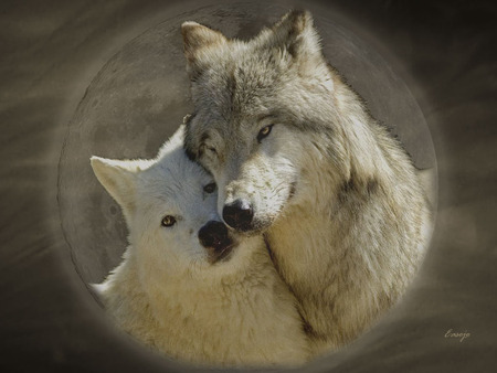 Wolf Love - dog, dogs, wolves, animals, nature, forest, wolf