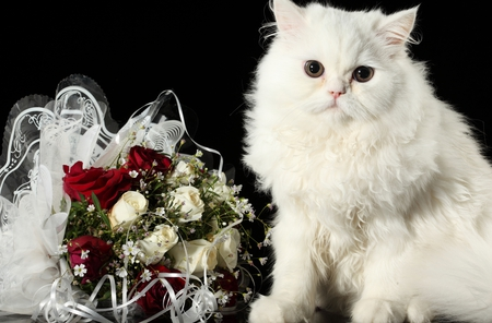Adorable Cat - still life, photography, animals, nature, valentines day, bouquet, red, red rose, white cat, roses, eyes, pretty, romance, paws, white roses, red roses, romantic, white rose, face, lovely, cat, cat face, cats, white, kittens, kitten, beauty, rose, sweet, cute, kitty, beautiful, flowers, adorable