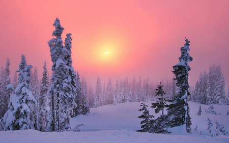 Pink Winter - field, gray, nice, dawn, frozen, background, murk, rack, pink, paysage, snow, vapor, photo, sunrises, snowy, cold, awesome, pc, winter, icy, sundown, photoshop, morning, blur, scene, pines, mirk, white, wallpaper, paisage, sunshine, beautiful, amazing, mistiness, sky, grove, cool, branches, wood, photography, trees, sun, yellow, steam, ice, sunbeam, black, firs, trunks, sunrays, evening, mist, sunsets, cena, haze, cloud, widescreen, fog, damp, paisagem, panorama, leaf, leaves, scenery, night, landscape, haziness, cenario, afternoon, desktop, seasons