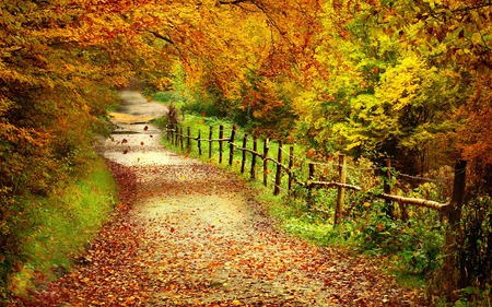 Autumn Path - splendor, amazing, beautiful, road, way, pretty, path, tree, beauty, fall, autumn, magic, yellow, landscape, nice, grass, forest, red, woods, green, foliage, trees, colorful, lane, colors, cute forest path, lovely, leaves, autumn colors, fence, nature, peaceful