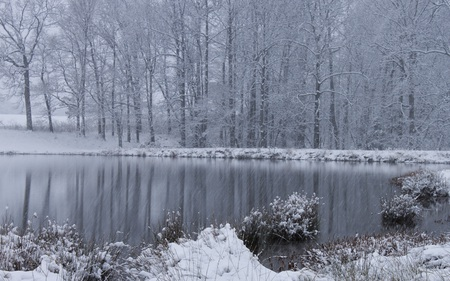 White Christmas - pond, beautiful, snow, forests, nature, winter