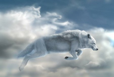 WHITE WOLF - clouds, sky, wolf, white