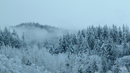 Snowy Morning - trees, sky, mist, washington, blue, mountain, winter, ridge