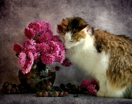 Alluring Fragrance - flowers, cat, grapes, vase, pink flowers