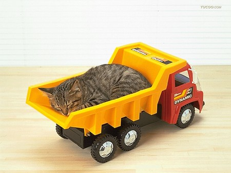 cat sleeping in toy car cats animals background. Black Bedroom Furniture Sets. Home Design Ideas