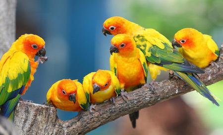 Jandaya-parakeet-parrots - green, animals, orange, colors, macaw, yellow, birds, bird, parrots