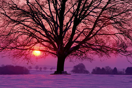 sunset - countryside, snow, winter, trees, sun