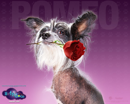 Hotel For Dogs Romeo