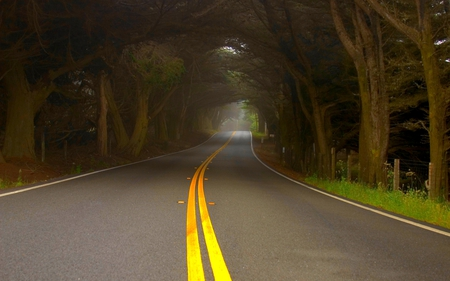 ALONG THE MISTY ROAD - tunnel, trees, road, mist, fog, nature, forest